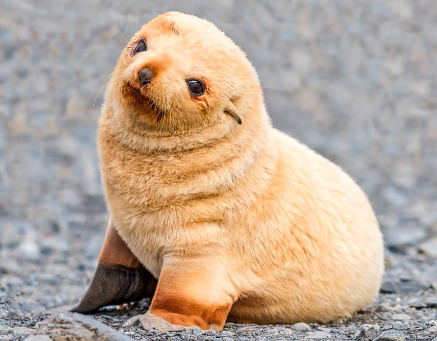 Adorable foca bebé